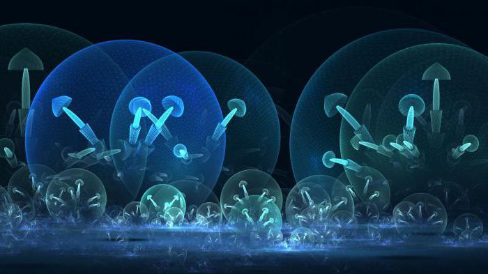 wann wachsen pilze