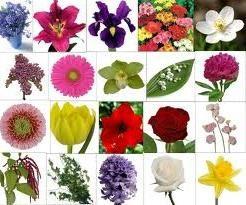 Flora: el significado de las flores?