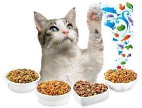 Jak wybrać najlepsze jedzenie dla kotów
