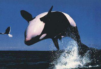 Dlaczego sen wieloryb zabójca? onejromancja