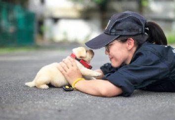 Maleńkie czworonożnych rekruci – nowe urocze policyjne Tajwanie