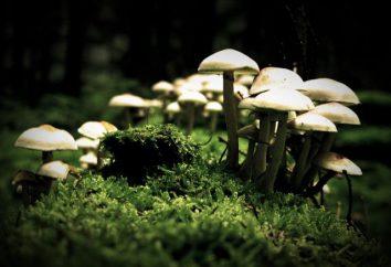 Znaki, które przynoszą grzyby razem ze zwierzętami. Materiały do lekcji