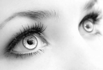 Konstrukcja, funkcja rogówki oka