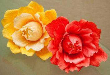 Master of kwiaty z bibuły (kwiaty, słodycze)