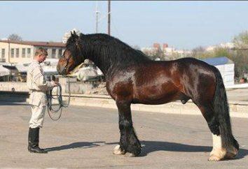 Pferde, Schwer-: Rock