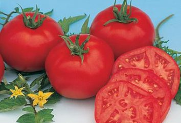 Tomato Moskwitsch – die precocious