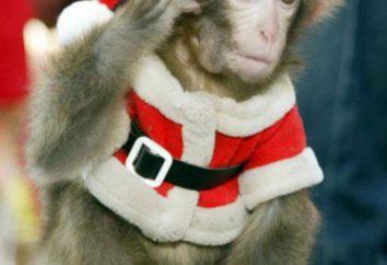 Rok Małpy – jak się spotkać? Odzież, stoły konferencyjne, znaki