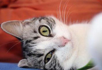koty psychologii. Ludzie, którzy kochają koty