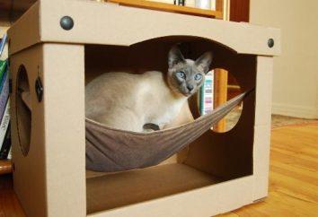 Casa en gatos. Puntos de vista y recomendaciones sobre la elección