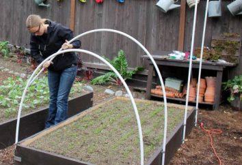 Jak zrobić mini szklarnię dla sadzonek. Jaka powinna być cieplarnianych dla sadzonek