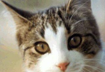 Comme l'odeur de la production d'urine de chat: conseils aux femmes au foyer