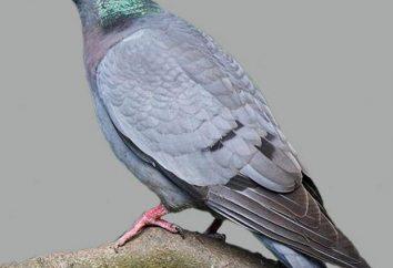 Las aves de Kazajstán: el nombre y la descripción