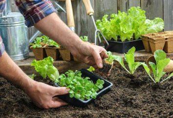 Por que você precisa Ripper jardinagem?