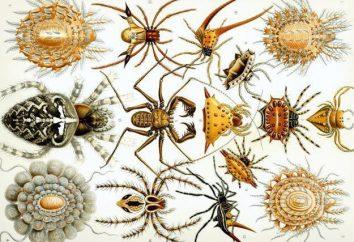 Ciekawostki o pająka. Klasa Pajęczaki: 10 Ciekawostki