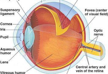 L'ipermetropia – che è un più o un meno? Le cause di ipermetropia. età lungimiranza