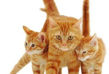 gatos rojos – mar positivo!