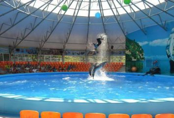 """""""Nemo"""", delfinario en Dzhubga: ¡aún no has visto un espectáculo de delfines!"""