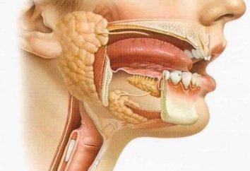 Choroby gruczołów ślinowych: rodzaje, przyczyny, objawy i leczenie