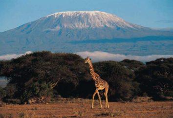 Qual è la montagna più alta in Africa? Kilimanjaro: descrizione, foto