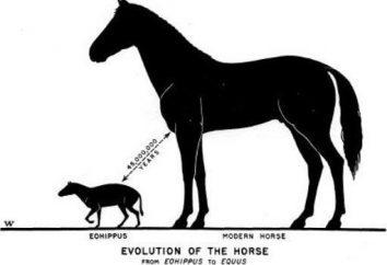 """número filogenética dos cavalos – """"ícone"""" do processo evolutivo"""