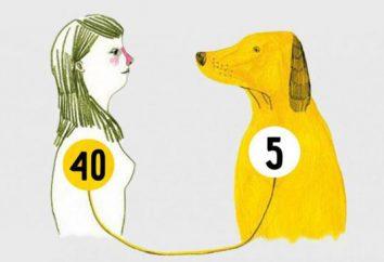 Durante un año, vivió un perro es de 7 años de la vida humana?
