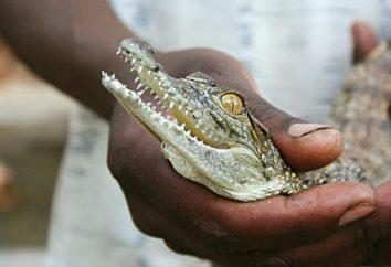 Crocodile Farm em Anapa – entretenimento exótico