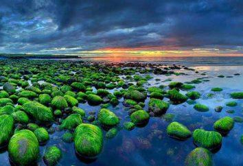Atrakcje Islandia: przyroda, klimat i ciekawostki
