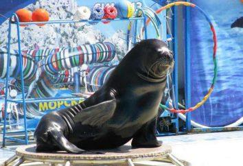 """Yalta, delfinario """"Aquatoria"""": dirección, foto, opiniones"""