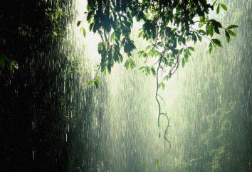 Sen Interpretacja: ulewny deszcz, deszcz, burza