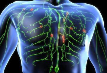 Fisiologia e l'anatomia umana. Il sistema linfatico