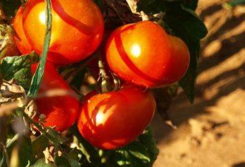 Versuchen Sie, Traumdeutung: siehe rote Tomaten – das ist der Punkt?