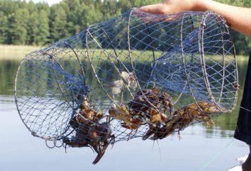 Łowienie raków spadać. Metody połowu kraby ręce