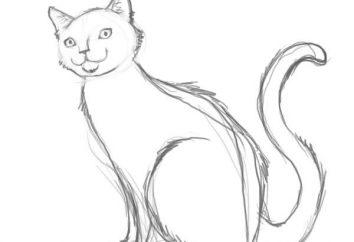 Jak narysować kota stopniowo ołówek. Jak narysować kota dla dzieci?