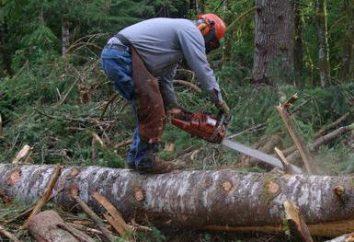 Como cortar a árvore: instruções, recomendações. Tudo bem para a árvore derrubada.