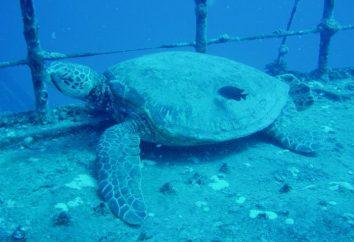 O melhor aparelho para respiração subaquática. Escafandro respiração subaquática