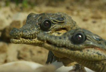 dokumentalne przyrody sprawiają, że jesteśmy szczęśliwsi?