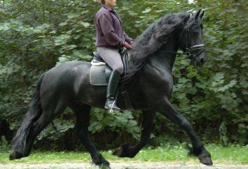 Quel est le cheval dans la propriété ou louer?