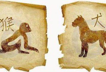 Monkey and Dog: horoskop Zgodność Wschodniej