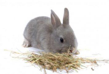 Trawa królików. Co króliki jedzą trawę? Co trawa nie należy podawać królikom?