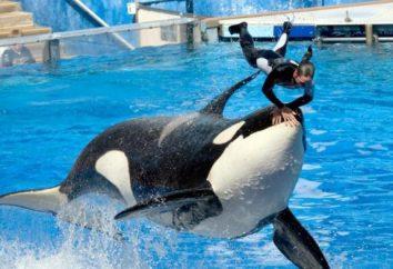 Frankreich unterzeichnete ein Gesetz zum Verbot der Zucht von Walen und Delfinen in Gefangenschaft