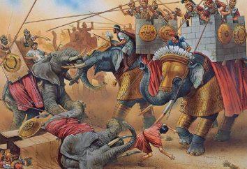 Słonie indyjskie: opis, historia i interesujące fakty