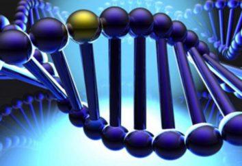 El polimorfismo – ¿qué es? polimorfismo genético