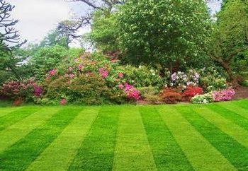 Piękne i gęsta trawa trawnik przed chwastami