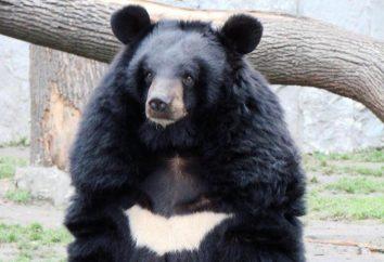 Qui traitent la bile d'ours? Propriétés et application de la bile d'ours