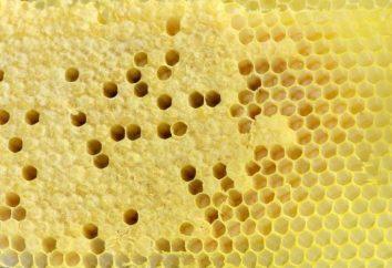 Comment créer une maison d'abeilles et que ces cellules?