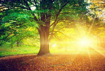 Dobry dzień zaczyna się od dobrego rano! Cytaty o dobry dzień