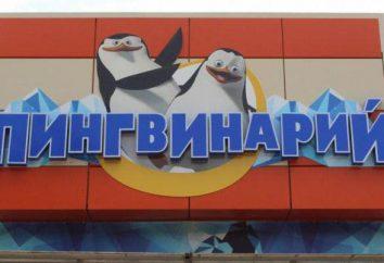 Pingvinary in Dzhubga einen Besuch wert!