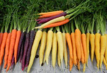 ¿Qué vitamina se encuentra en las zanahorias en grandes números?