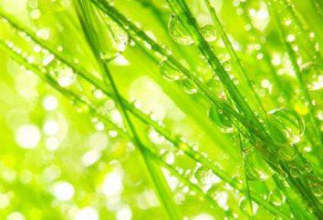 Kolor zielony jadowity: funkcje, rola w sztuce projektowania