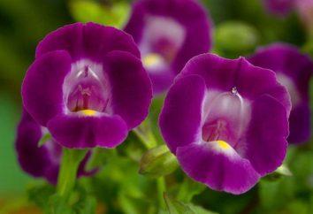 Tore – welche Art von Blumen? Tore: Pflanz- und Pflege